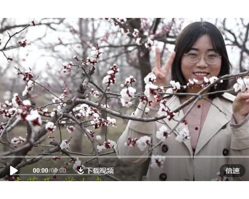 巨野视频宣传片 | 董官屯镇千亩杏花盛开,繁华似锦若仙境